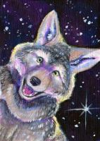 Acrylic Coyote aceo by Stormslegacy