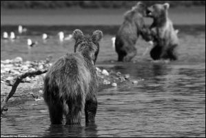 playing bear by Martin-Gerber