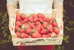 268/365 Strawberries by photographybyteri