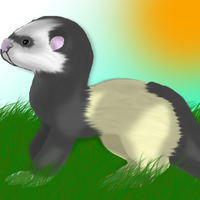 Ferret! by paragonthapuppy