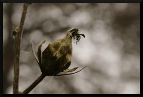 The Winter Bud by McFossey
