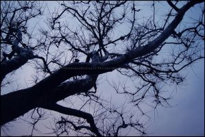 Twisted Branches by GrotesqueDarling13