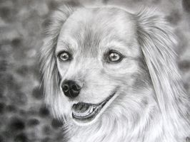 Dog portrait - Commission by bleistiftkind