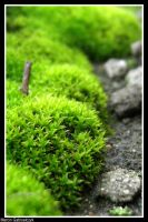 Tiny green plant by MarcinG1