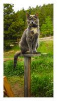 Cat Stand by manwithashadow