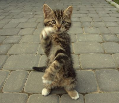 kung-fu kitty! by Amelie1994