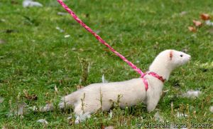 Hand-made ferret harnesses for sale by TheReticChick