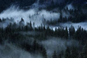 Misty forest by porbital