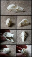 Straw-Coloured Fruit Bat Skull by CabinetCuriosities