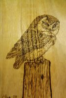 Wood burn owl by alisehansen