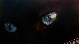 Zeus' eyes. by sunnytally