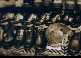 Cat Nap by AndreaTamme