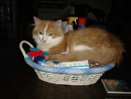 THors New Basket by aragornsparrow