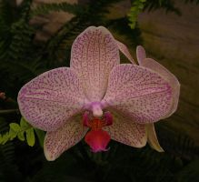 Spotty Orchid by creativemikey