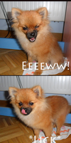 Random Dog Emotions by Sapphiresenthiss