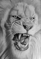 Panthera leo by tybo231