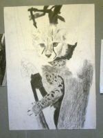 Charcoal: Cheetah Cub Stage 5 by Indiana8Jones