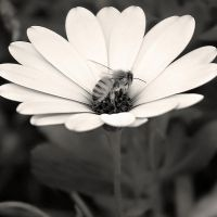 Busy Bee by Jeroneos