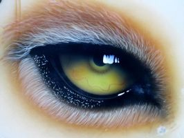 cougar eye by coincarver