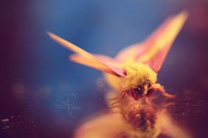 Learning to Fly by Alyphoto