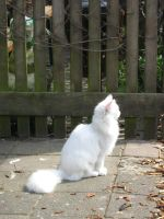 White Cat 1 by Electricstock