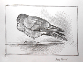 Portrait of a quiet pigeon by altergromit