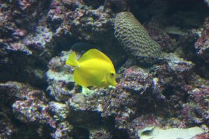 Yellow Fish by WoodenOx