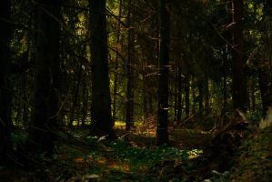 Backwoods by Anna-Belash
