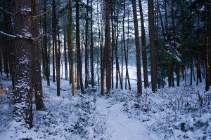 Snowy Woodland 14 by joannastar-stock