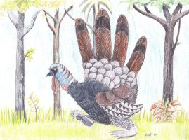 Wild Turkey by inner-etch