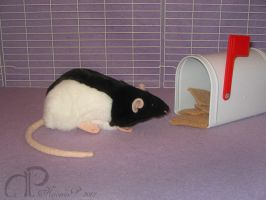 Black Hooded Rat Plushie by Morumoto