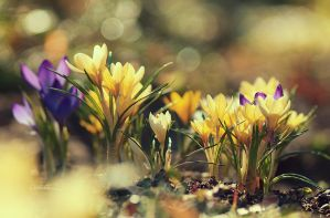 First flowers by Eredel