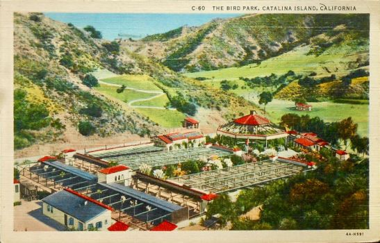 Vintage California -  Bird Park, Catalina Island by Yesterdays-Paper