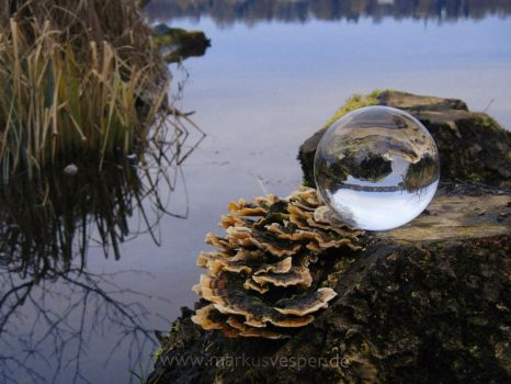 Glass sphere on stump at the lake by Acrylicdreams