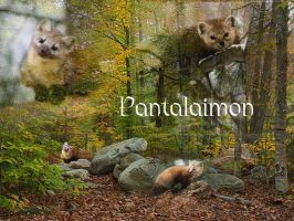 Pantalaimon Wallpaper by Zam522