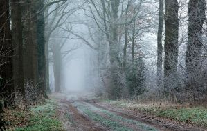 Going out on a cold and misty morning by jchanders