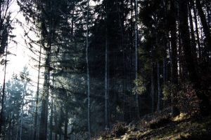 Wald by pizza395