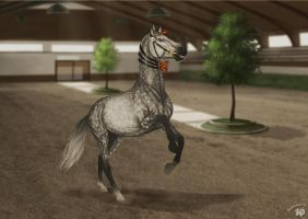 Spectacular Stallion Show   Liberty by Zoubstance
