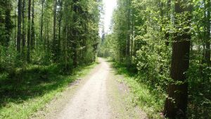 Pleasant Path in Finland by Anri82