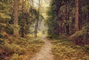 A path through the forest by Pajunen
