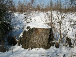 Snow Stump by pictsy