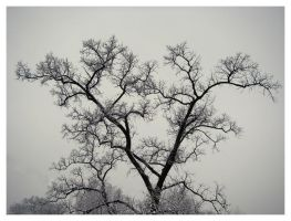 Winter: Gloomy, foggy tree by LadybirdM