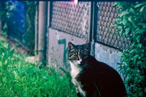 Zenit - City Cat by Ferox04