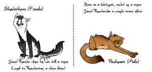 -tDE- Thunderclan Adoptable Tryouts by Allizia