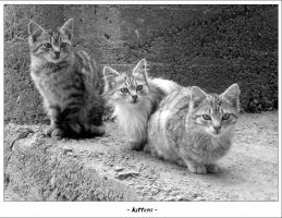 Kittens by tmiljan