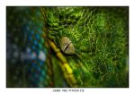 Green Tree Python Eye by Dr-Koesters