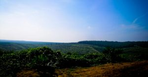 LADANG SAWIT by meefro683