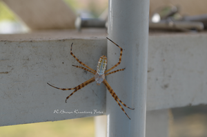 Orb Weaver by RBrownKreationz