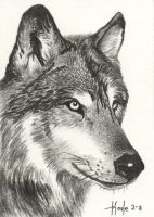 Lone Wolf - Timber Wolf by HOULY1970
