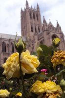 National Cathedral by LexyLou16
